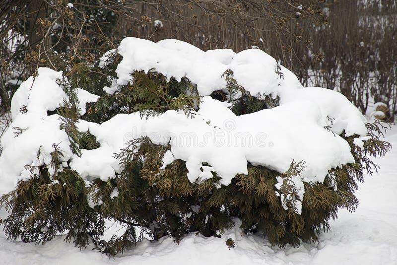 Snö började att falla på slutet av vintern i solskenet royaltyfri bild