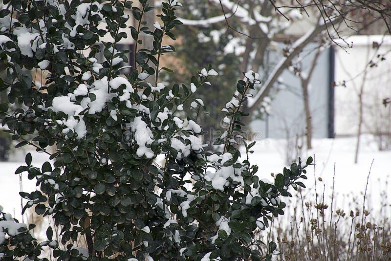 Snö började att falla på slutet av vintern i solskenet arkivbild