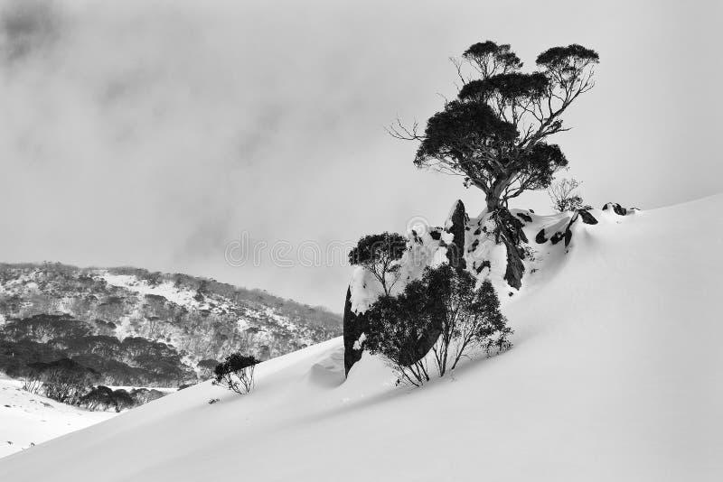 Snö för SM-lutningsträd fotografering för bildbyråer