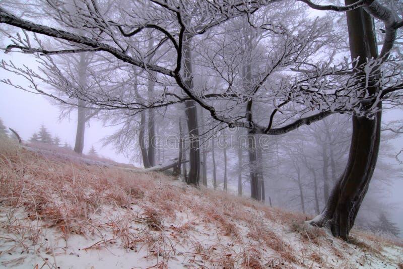 Snö för vintersnöskogen ligger på filialerna av träd Frostigt och dimmigt snöig väder härlig skogliggandevinter royaltyfri foto