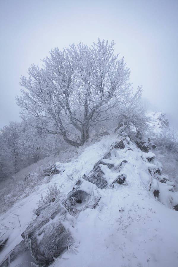Snö för vintersnöskogen ligger på filialerna av träd Frostigt och dimmigt snöig väder härlig skogliggandevinter fotografering för bildbyråer