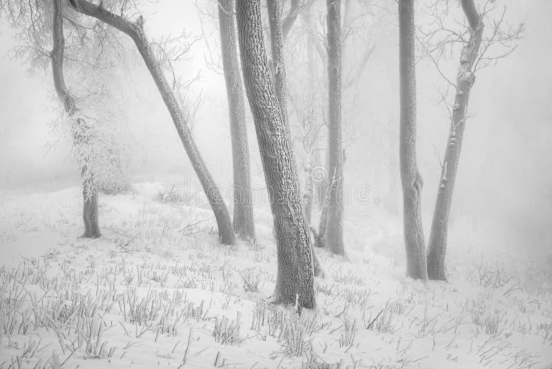 Snö för vintersnöskogen ligger på filialerna av träd Frostigt och dimmigt snöig väder härlig skogliggandevinter arkivbild