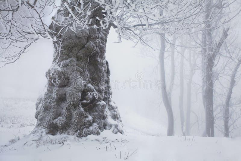 Snö för vintersnöskogen ligger på filialerna av träd Frostigt och dimmigt snöig väder härlig skogliggandevinter royaltyfria foton