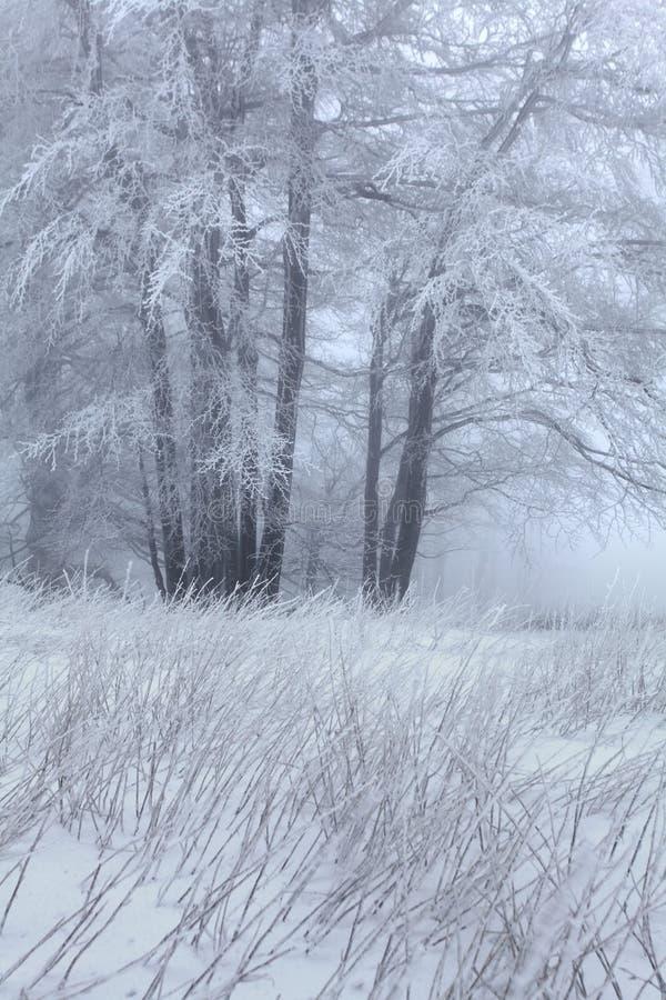 Snö för vintersnöskogen ligger på filialerna av träd Frostigt och dimmigt snöig väder härlig skogliggandevinter arkivfoton