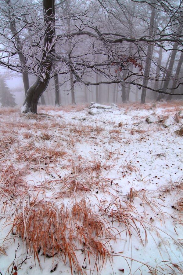 Snö för vintersnöskogen ligger på filialerna av träd Frostigt och dimmigt snöig väder härlig skogliggandevinter royaltyfri fotografi