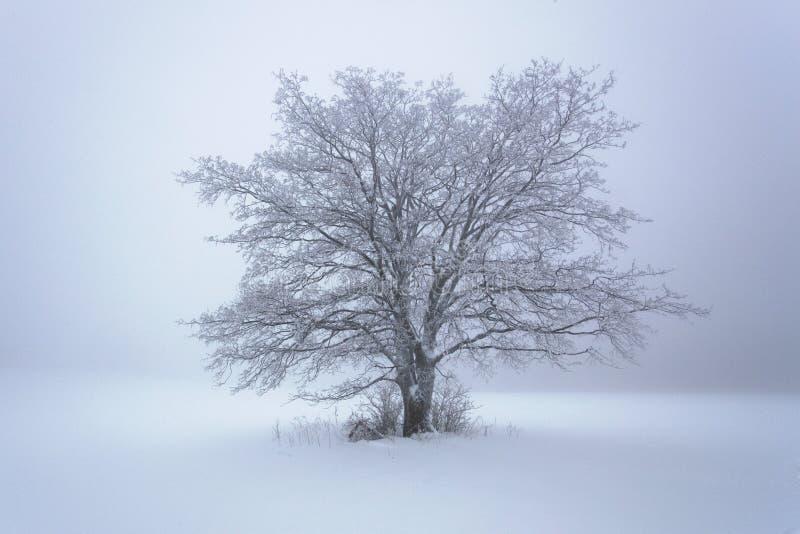 Snö för vintersnöskogen ligger på filialerna av träd Frostigt och dimmigt snöig väder härlig skogliggandevinter royaltyfri bild