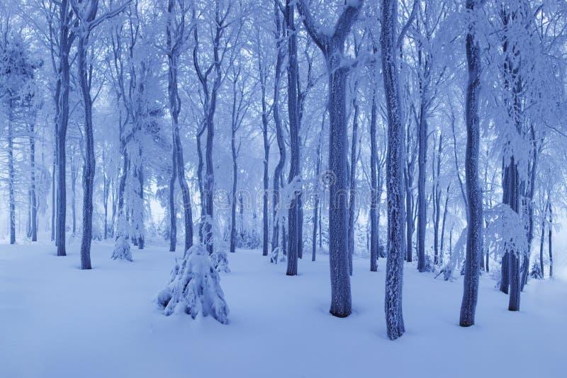Snö för vintersnöskogen ligger på filialerna av träd Frostigt snöig väder Härlig skog för fantasi för vinterskoglandskap arkivfoton