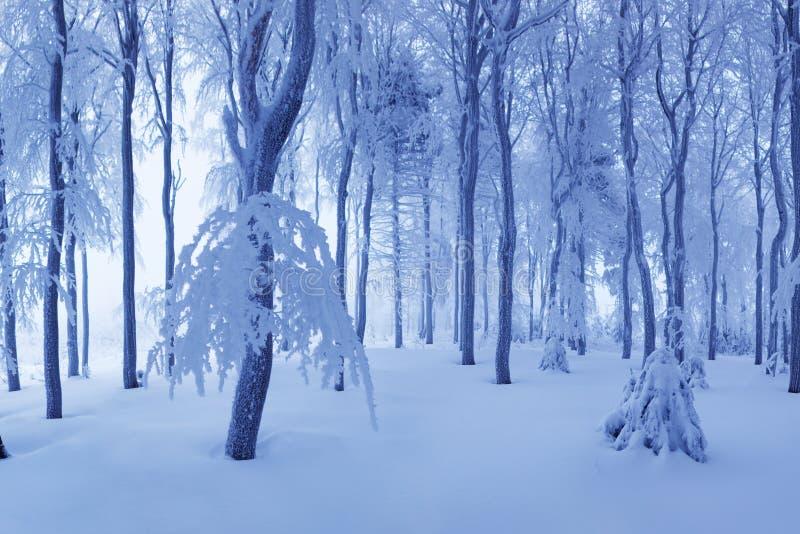 Snö för vintersnöskogen ligger på filialerna av träd Frostigt snöig väder Härlig skog för fantasi för vinterskoglandskap arkivbild