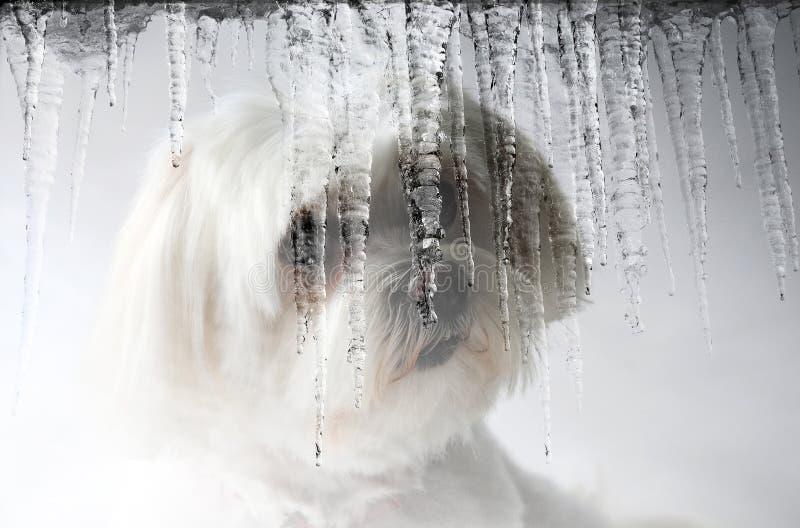 Snö-hund royaltyfri bild