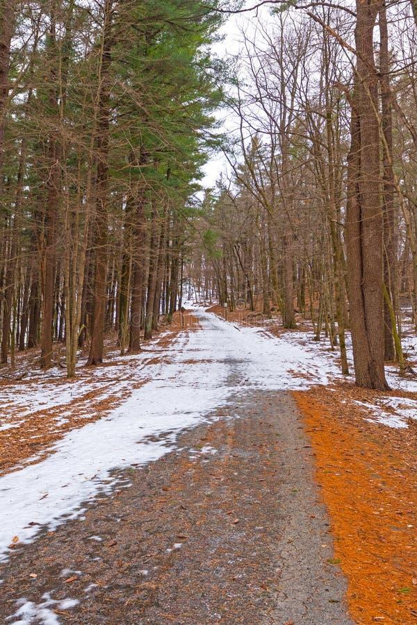 Snö och is på en lantliga Forest Road royaltyfri foto