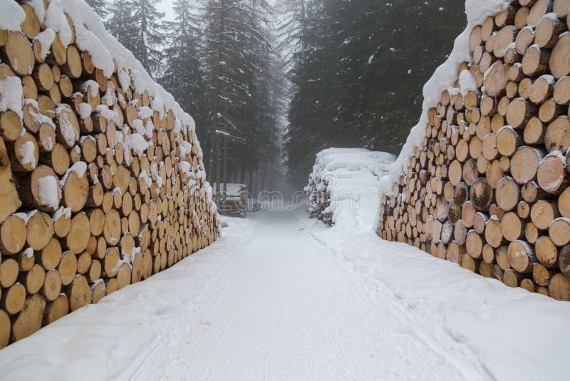 Snö och trän royaltyfria foton