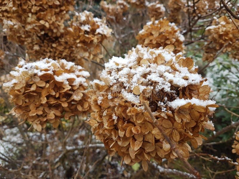 snö på de torkade sidorna i trädgården royaltyfri fotografi