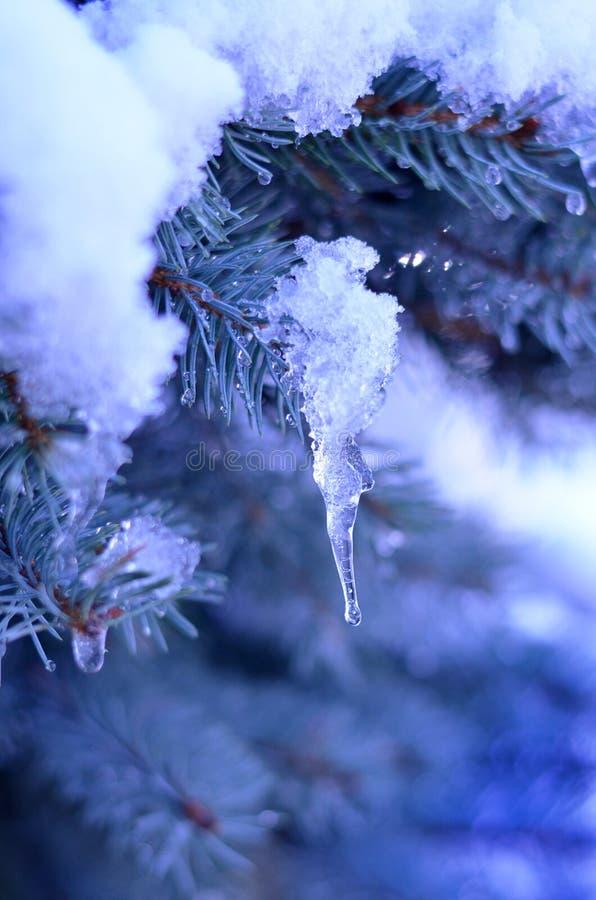 Snö på filialerna och istappen royaltyfri foto