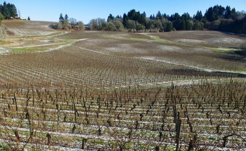 Snö på vingårdjordningen arkivbild