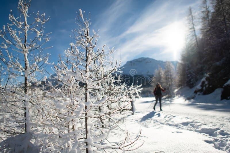 Snö som är vit nära det nordiskt, skidar spåret royaltyfri fotografi