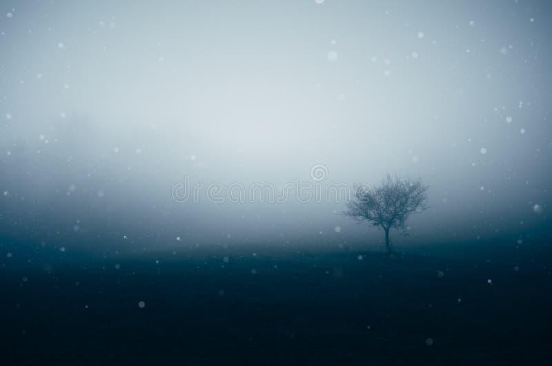 Snö som faller över mystisk äng med dimma royaltyfria bilder
