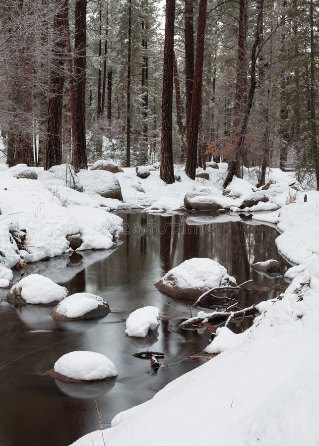 Snö täcker bankerna av en ström som kör till och med skogen för vintertid royaltyfri bild