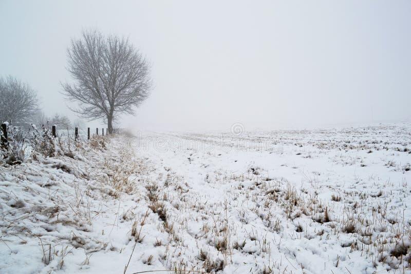 Snö täckt fält med trädet royaltyfri fotografi