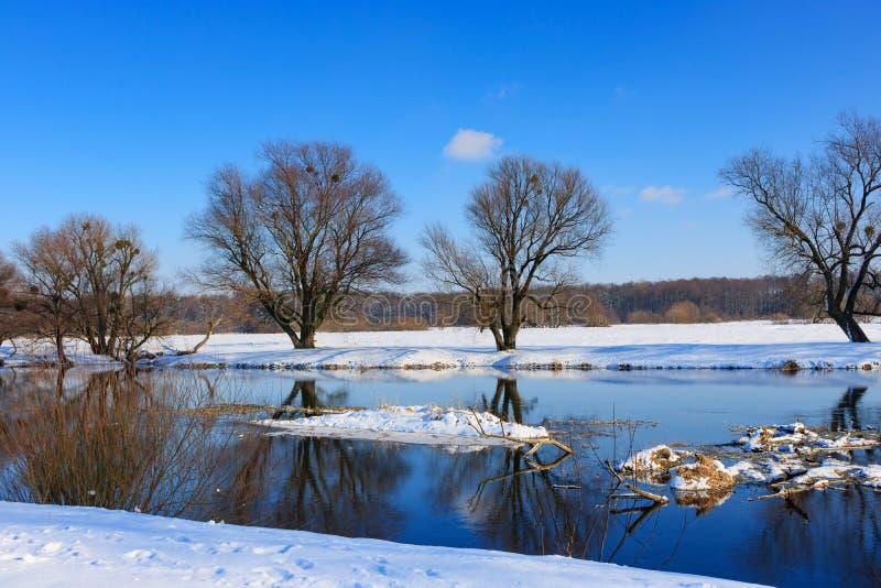 Snö-täckt flodbank på en solig vinterafton royaltyfri foto