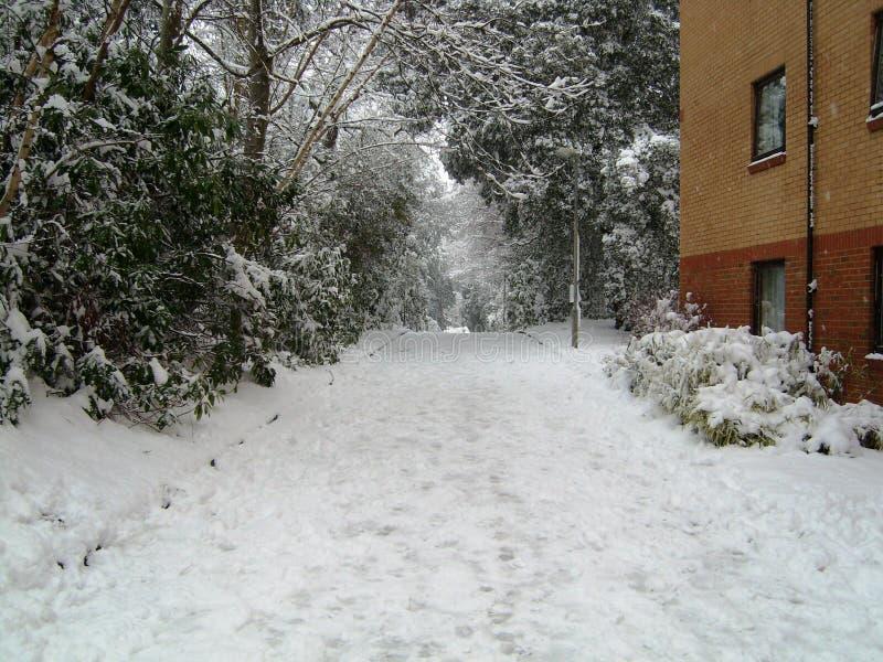 Snö täckt fodrad väg för vinter träd royaltyfri foto