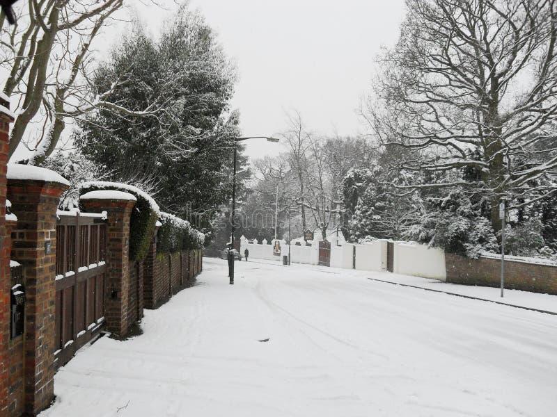 Snö täckt fodrad väg för vinter träd arkivbild