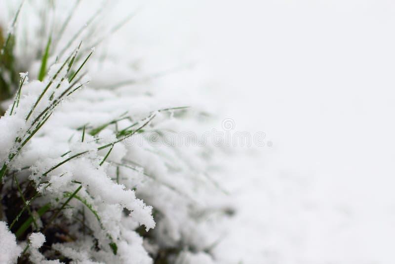 Snö täckt gräs arkivbilder