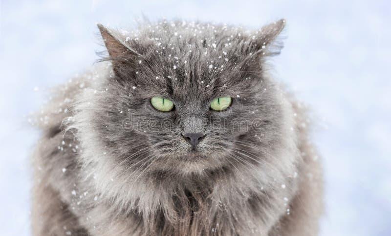 Snö-täckt katt med gröna ögon som sitter på street_en royaltyfri foto
