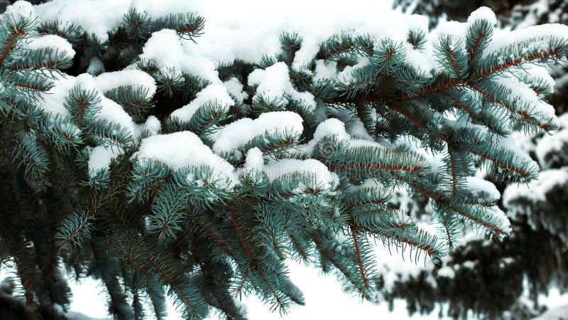 Snö-täckt prydlig filial arkivbilder