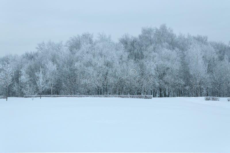 Snö-täckt träd och snö royaltyfria foton