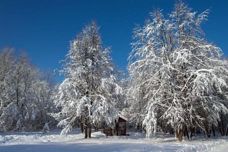 Snö-täckt träd och summerhouse arkivbilder