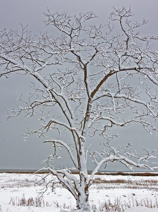 Snö täckt trädträskstrand arkivbild