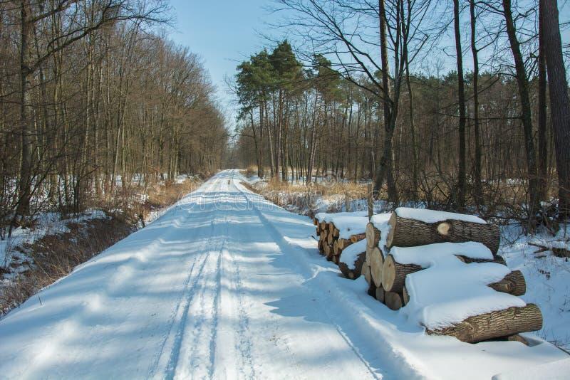 Snö-täckt väg till och med skogen arkivfoto