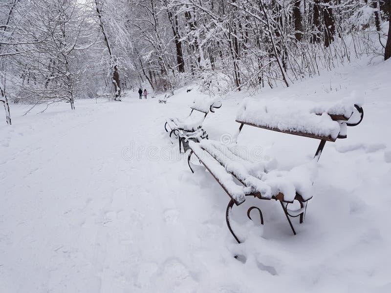 Snö-täckte bänkar i en vinter parkerar Europa ukraine Lviv Stryjski parkerar Januari 2018 royaltyfria foton