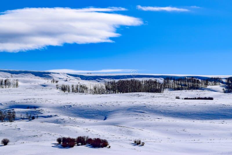 Snö täckte den Colorado backen med blå himmel i vinter fotografering för bildbyråer