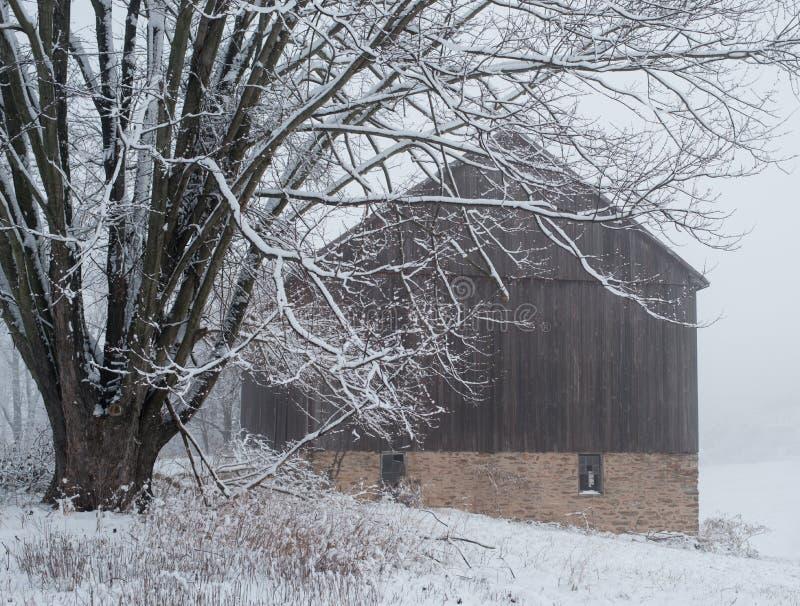 Snö täckte den gamla ladugården med lönnträdet och fältet i förgrund arkivbilder