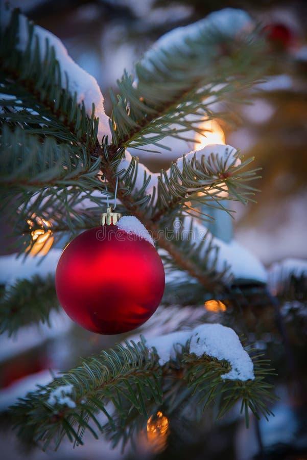 Snö täckte granfilialen med den röda julstruntsaken och tände ca arkivfoto
