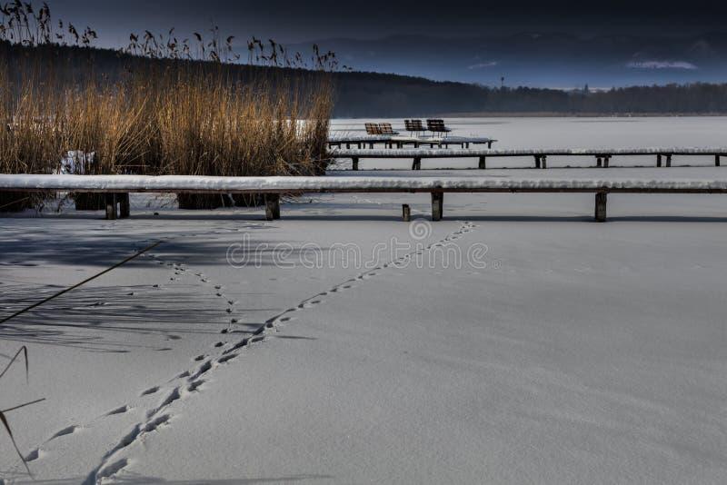 Snö täckte pir nära en sjö, med svanfotspårvintertid I royaltyfria foton