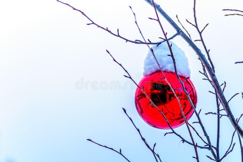 Snö täckte röd julgarnering som hänger på trädfilialer av ett träd royaltyfri bild