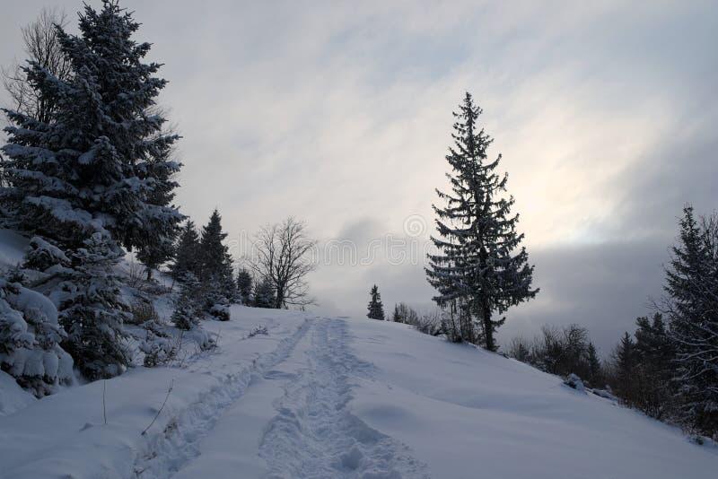 Snö täckte skogen med sörjer träd i bergen i vintersäsong arkivbilder
