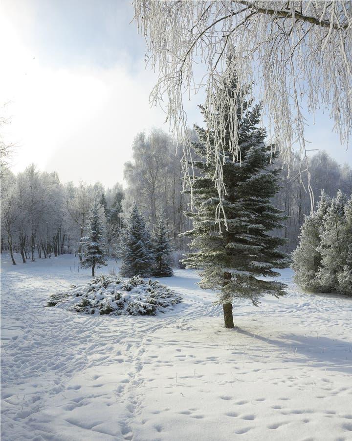 Snö-täckte träd i staden parkerar fotografering för bildbyråer