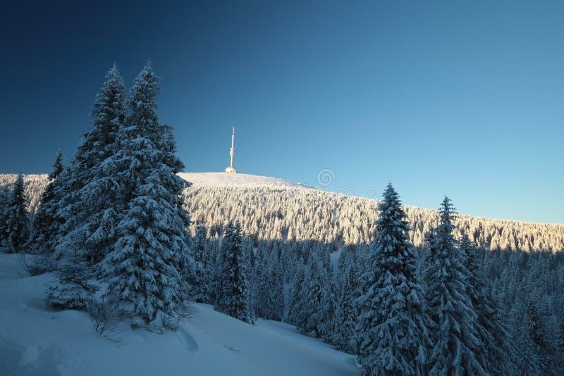 Snö täckte träd på berglutningen arkivbild