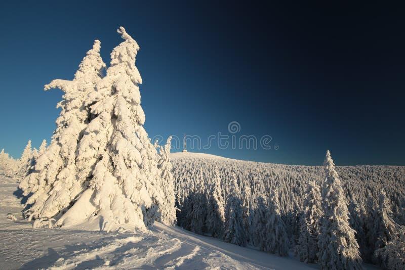 Snö täckte träd på berglutningen fotografering för bildbyråer