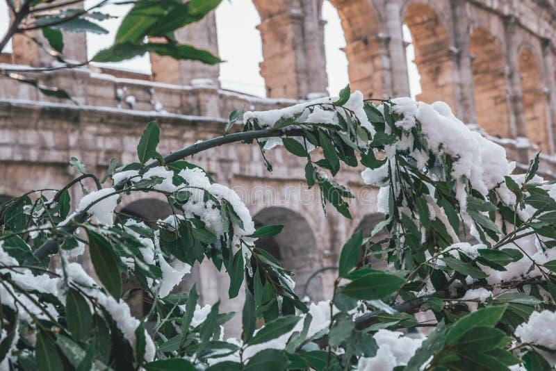 Snö-täckte träd på coliseumen royaltyfri fotografi