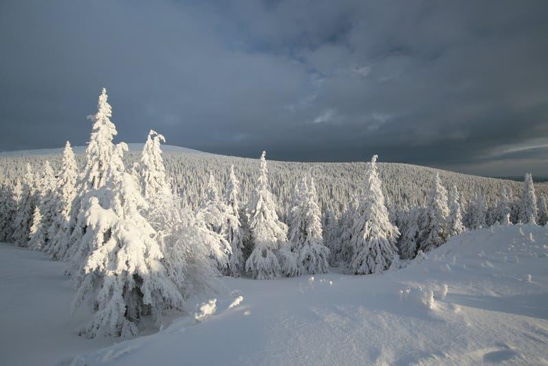 Snö täckte träd på en bakgrund av mörka moln royaltyfri bild