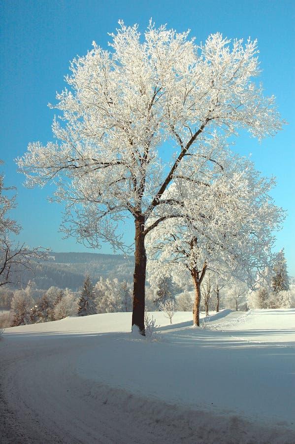Snö-täckte väg och träd royaltyfri fotografi