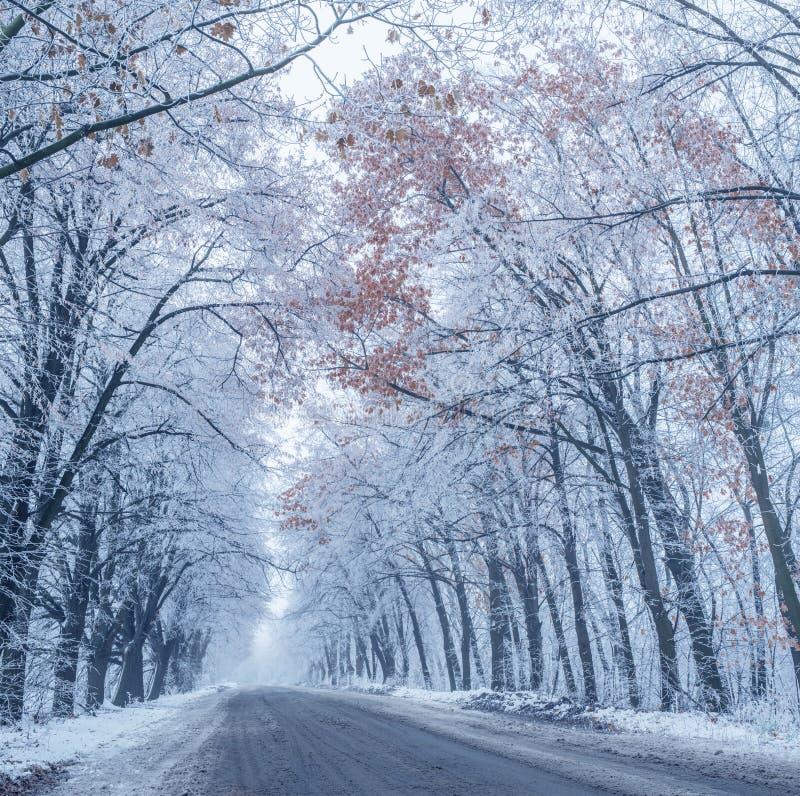 Snö-täckte waysideträd royaltyfria foton