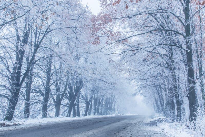 Snö-täckte waysideträd arkivfoto