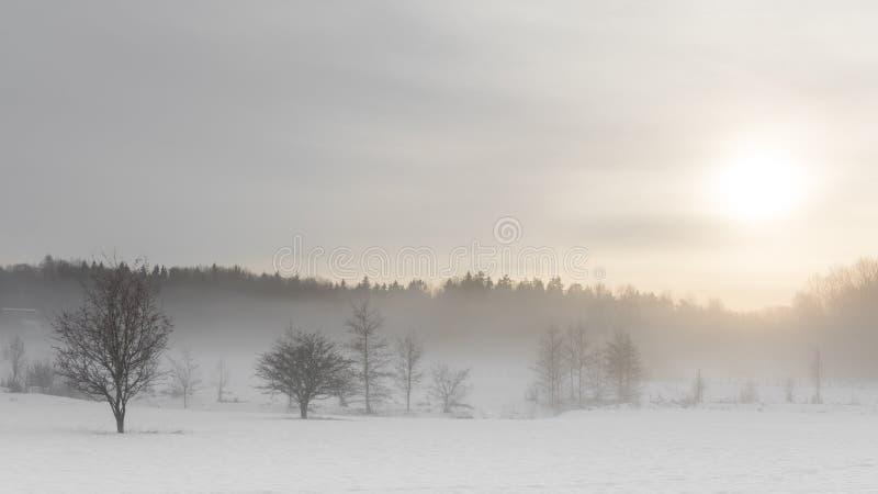 Snöa dimma av vintern, Stockholm, Sverige royaltyfri foto