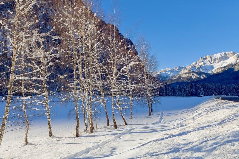 Snöa dolda björkträd som fodrar bygdvägen, vinterplats Solig kall dag royaltyfri fotografi