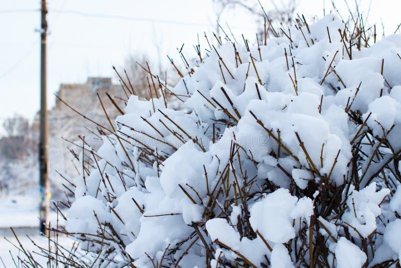 Snöa dolda buskar, bakgrund av träd för en dubbel exponering, många filialer, filialer i snö, snö på filialer, snö på träd arkivfoton